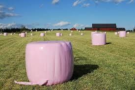 rosa balar